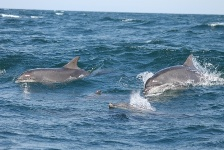 Moray Firth Dolphins LovetoEscape pd