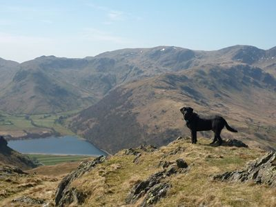Lake District Pet Friendly Holidays
