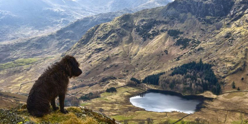 Pet and Dog Friendly Holidays in the Lake District