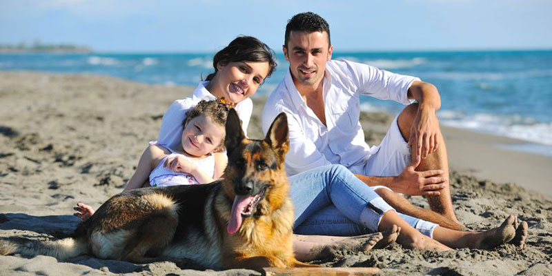 Pet and Dog Friendly Holiday Accommodation