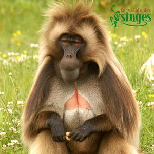 Vallee des Singes Monkey Valley, 