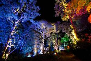 Enchanted Forest in Perthshire
