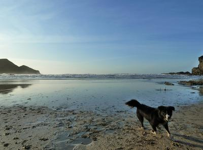 Last Minute Availability on the North Cornish Coast, Crackington Haven Bude Boscastle Portscatho holiday cottage
