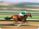 Horse Racing Attractions