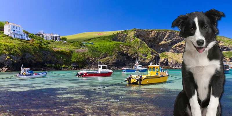 Dog and Pet Friendly Holidays in Cornwall