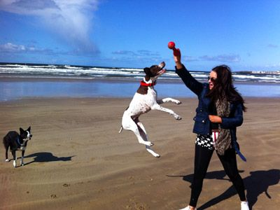 Pet and Dog Friendly Holiday Accommodation - Book your Holiday directl